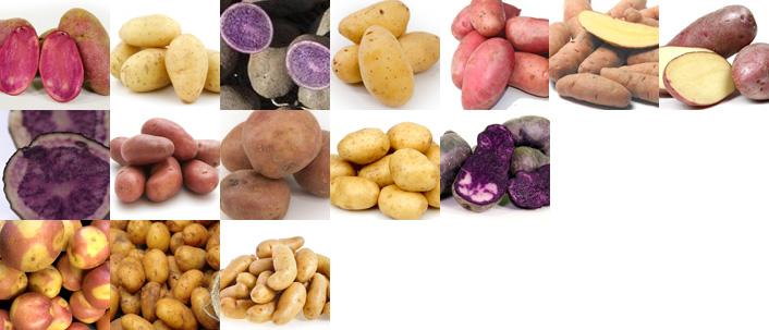 Jac van den Oord levert een grote diversiteit aan aardappelen